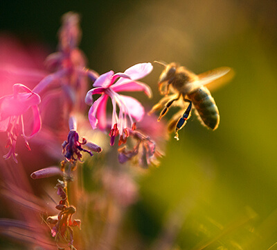 Tierschutz: badenova Bienen